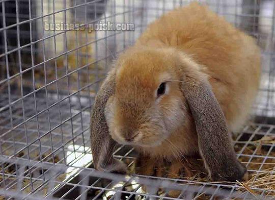 Выращивание кроликов, реализация кроликов
