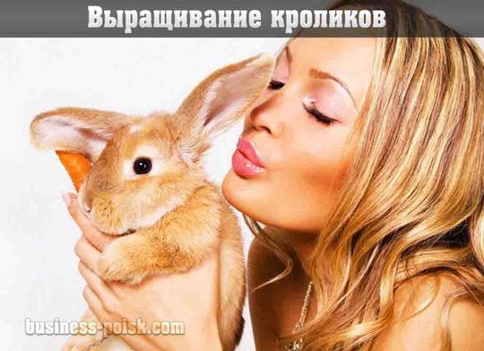 Выращивание кроликов – бизнес с нуля