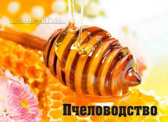 Пчеловодство как бизнес или источник