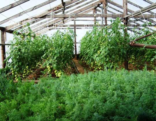 Зимние бизнес-идеи: выращивание зелени зимой