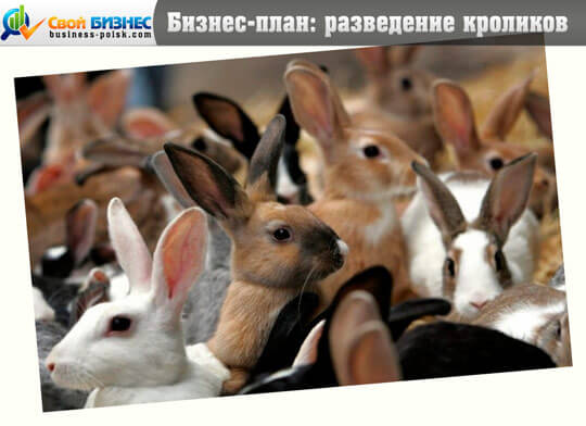Разведение кроликов ключевые моменты бизнес-плана