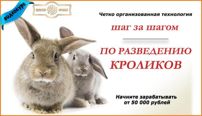 Бизнес План Кролики