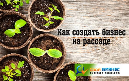 Бизнес на рассаде капусты: как заработать 4000 долларов за 4 месяца