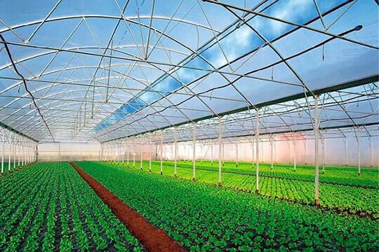 Промышленная теплица для выращивания огурцов