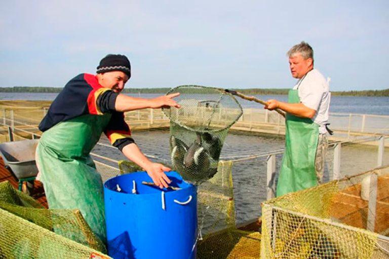 прудовое рыболовное хозяйство