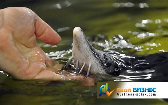 Бизнес-план разведения рыбы - Бизнес