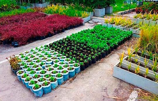 Способ выращивания овощей Джоя Джевинса