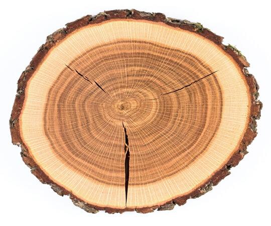 Внутренние изъяны древесины