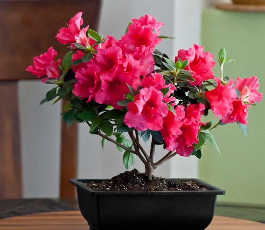 Уход и выращивание домашних цветов с фото