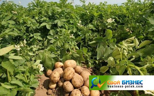 Бизнес план хозяйства по выращиванию плодовых деревьев 42
